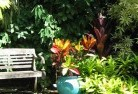Abergowrie Tropical landscaping 11