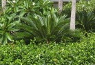 Abergowrie Tropical landscaping 4