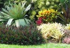 Abergowrie Tropical landscaping 9